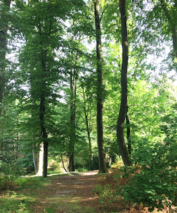Hotel Bess Albersdorf | Wanderwege in weitläufigen Laub- und Nadelwälder mit zahlreichen Stätten aus der Jungsteinzeit und Bronzezeit | Öffnet einen internen Link im aktuellen Fenster.